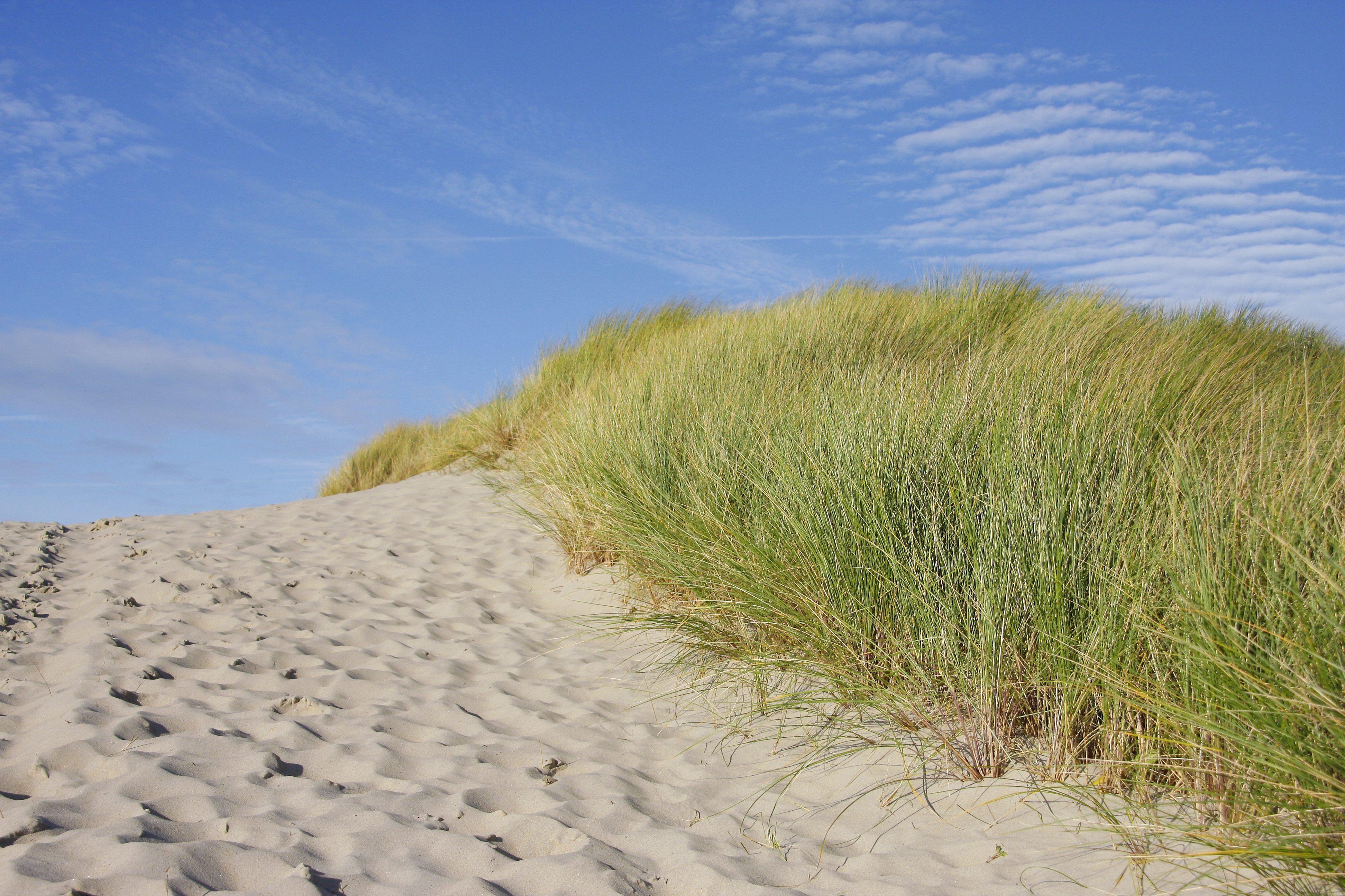 beach-563073